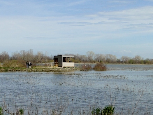 Viewing blind at Hillman Marsh