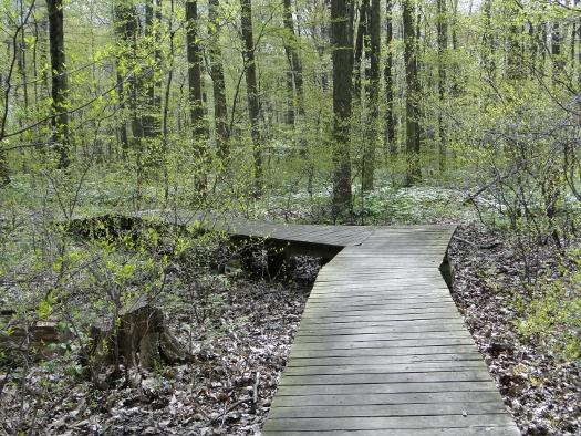 Kopegaron Woods