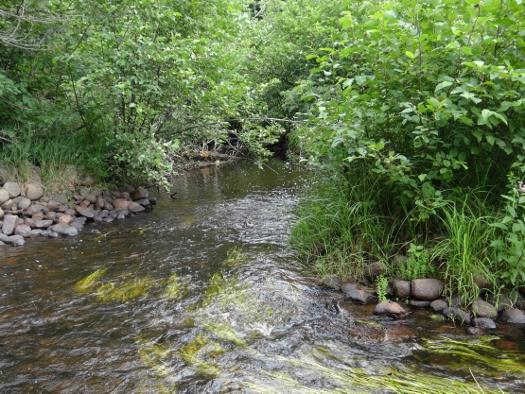 Kennedy Creek