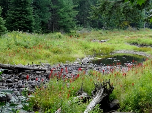Creek at the end of Gut Lake