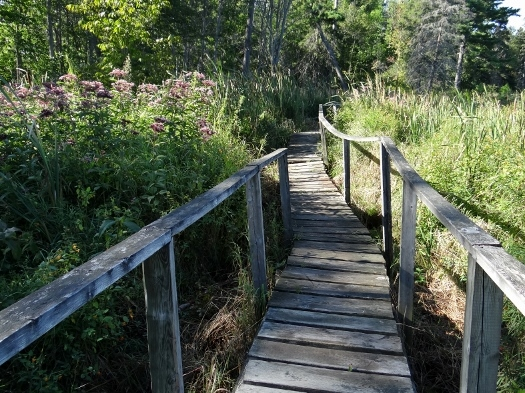 Beaver Dams Trail