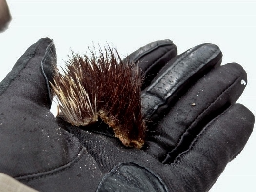 Porcupine Flesh