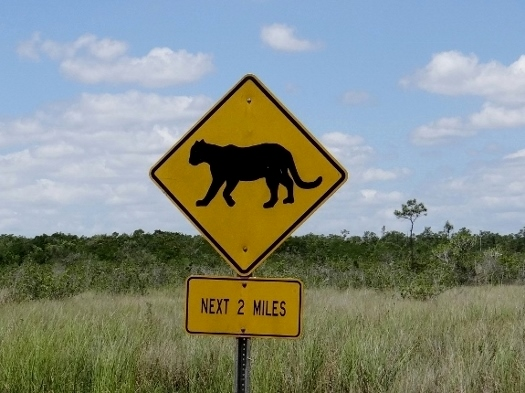 Panther Crossing Sign (panthers not guaranteed)