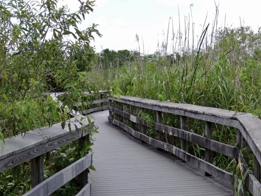 Anhinga Trail Boardwalk