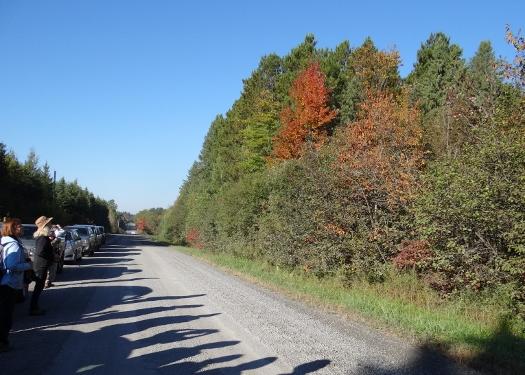 Larose Forest
