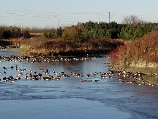 Eagleson Stormwater Ponds