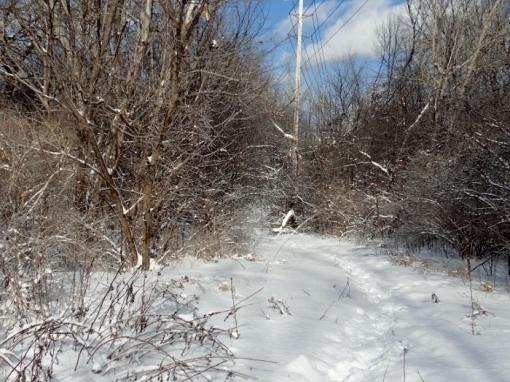 The Feeder Trail