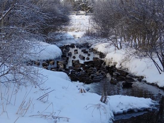 Creek in Appaloosa Park