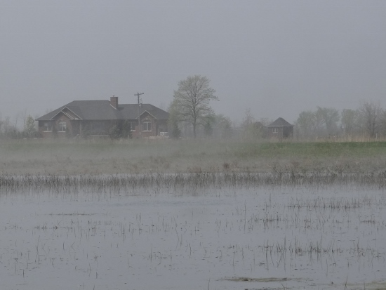 Hillman Marsh in the fog