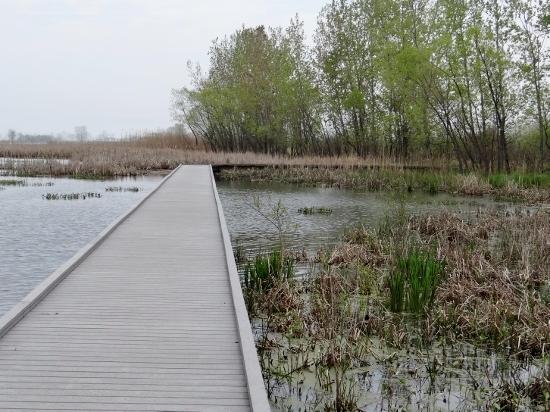 Boardwalk at Hillman Marsh