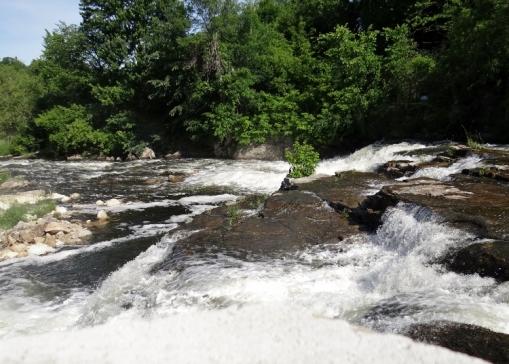Rapids Clubtail habitat in Almonte