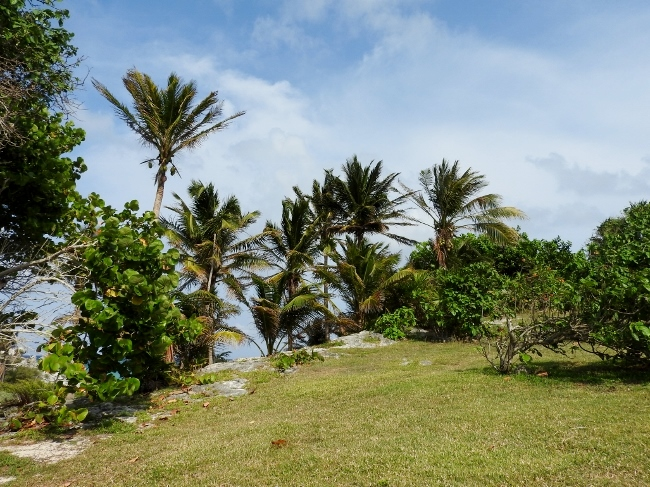 Palm Trees at Tulum