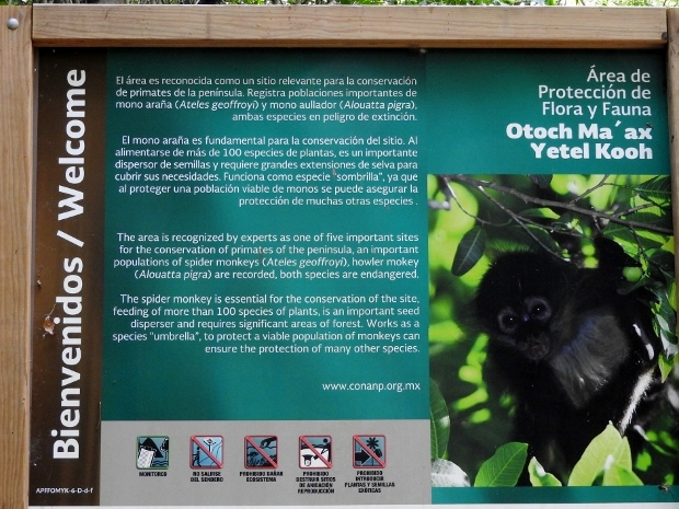 Spider Monkey Sanctuary